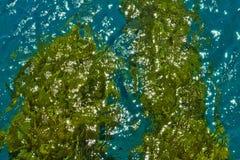 Costa de Mar Vermelho fotografia de stock