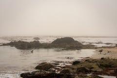 Costa de Monterey fotografía de archivo libre de regalías