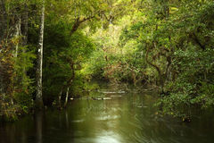Costa de Sweetwater Fotos de Stock Royalty Free