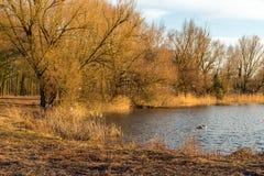 Costa de um lago com as árvores em cores outonais Foto de Stock