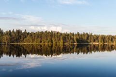 Costa de um lago da floresta Imagens de Stock Royalty Free