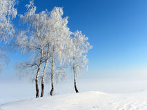 Costa de Volga Fotografia de Stock