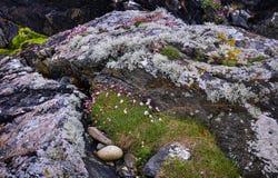 Costa del Donegal della contea, massi coperti Fotografia Stock Libera da Diritti