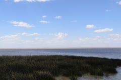 Costa del océano demasiado grande para su edad con la hierba, área ecológicamente limpia Fotos de archivo