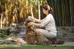 Costa del sole, Queensland, Australia - 17 settembre 2014: Grande tigre di Bengala allo zoo dell'Australia dentro il suo composto Fotografia Stock