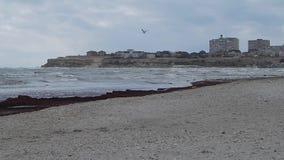 Costa di autunno del mar Caspio video d archivio