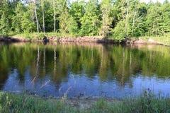 Costa di estate della foresta river2 immagine stock