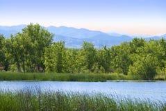 Costa distante do lago com árvores fotos de stock
