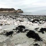 Costa do leste Inglaterra de Flamborough Yorkshire do nr da baía de Thornwick Foto de Stock Royalty Free