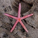 Costa do leste Inglaterra de Yorkshire da praia de Barmston Fotografia de Stock Royalty Free