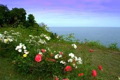 Costa do Mar Negro do jardim de rosas do beira-mar Imagens de Stock Royalty Free