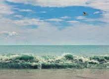 Costa do oceano Foto de Stock