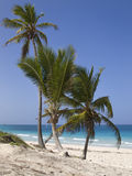 Costa do oceano Fotografia de Stock Royalty Free