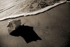 Costa do Seashell do Sepia imagem de stock royalty free