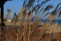 Costa do wilde do mar do inverno filme