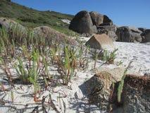 Costa e spiaggia rocciose australiane con le rocce giganti e le piante indigene Fotografie Stock Libere da Diritti