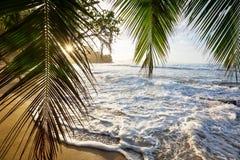 Costa en Costa Rica Imagen de archivo
