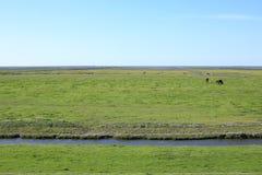 Costa idílica en la provincia Frisia, los Países Bajos Fotografía de archivo libre de regalías