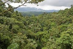 costa lasu deszczu rica zdjęcie stock