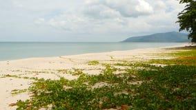 Costa lavada por el agua reservada azul paisaje exótico del paraíso tropical idílico de la costa arenosa cubierto con la hierba v almacen de metraje de vídeo