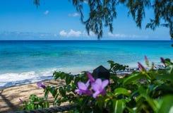 Costa oeste el Caribe de septiembre Fotografía de archivo libre de regalías