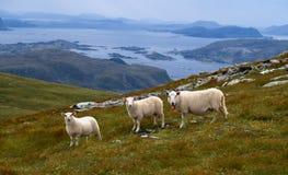 Costa oeste norueguesa Foto de Stock Royalty Free