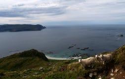 Costa ovest della Norvegia fotografia stock libera da diritti