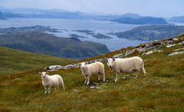Costa ovest norvegese Fotografia Stock Libera da Diritti