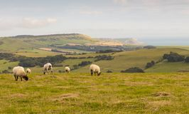 Costa Regno Unito di Dorset Fotografia Stock Libera da Diritti