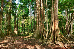 Costa Rica Lizenzfreie Stockfotografie