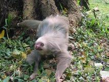 Costa Rica Fotografie Stock