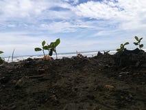 Costa Rica-aard royalty-vrije stock foto's