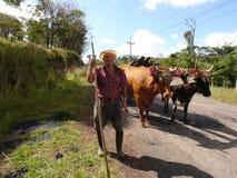 COSTA RICA BOYERO COM SEUS BOIS Imagem de Stock Royalty Free