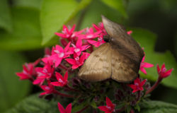 Costa Rica Butterfly Stock Images