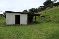 Costa Rica chałupa na gospodarstwie rolnym Zdjęcie Royalty Free