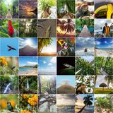 Costa Rica collage. A collage of diverse landscape and animal images  of Costa Rica Royalty Free Stock Images