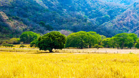 Costa Rica - cultural landscape. An example of cultural landscape in Costa Rica Guanacaste region Royalty Free Stock Photo
