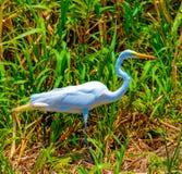 Costa Rica Fauna stock image
