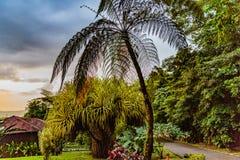 Costa Rica Flora fotografering för bildbyråer