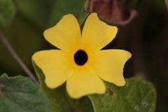 Costa Rica Flora Stockfotos