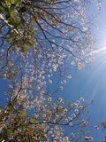 Costa Rica Floral Tree lizenzfreies stockfoto