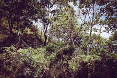 Costa rica forest green trees Stock Photography