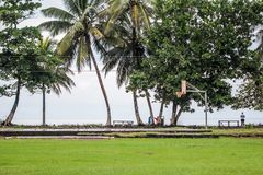Palms above green field in front of the ocean. Costa rica green landscape with a basketball Stock Images