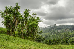Costa Rica Landscape Stock Images