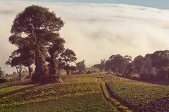 Costa Rica landscapes Stock Photos