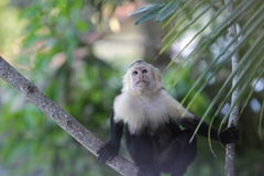 Costa Rica - Manuel Antonio Royaltyfria Bilder