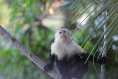 Costa Rica - Manuel Antonio Royalty Free Stock Images
