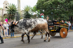 Costa Rica ox cart. Traditional ox-cart of Costa Rica during the annual parade in Escazu Stock Photo