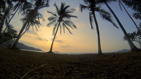 Costa Rica Palms Hermosa. Wide angle looking through palm trees out to the Pacific Ocean late afternoon from Hermosa Beach, Costa Rica stock footage