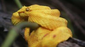 Costa Rica, Panama krajobrazy i natura i Ameryka podróż zaniki Obraz Stock